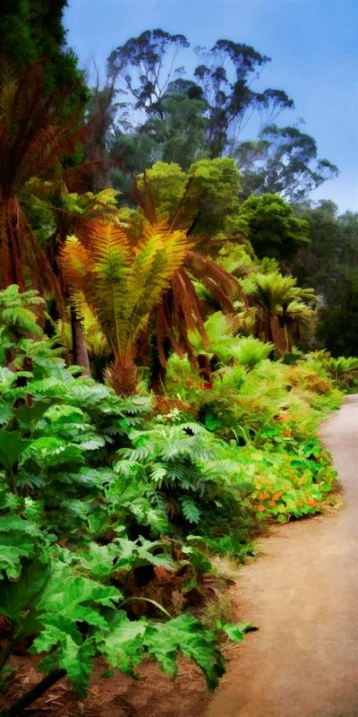 BorrelliPa-Tree-Fern-Grove_1