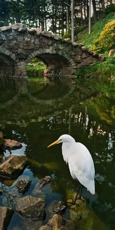 SobolHe-Rustic-Bridge-with-Egret_1