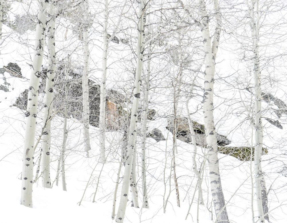 hauserje-Meditation-on-Snow-from-Quintych-Image-phot-16x20