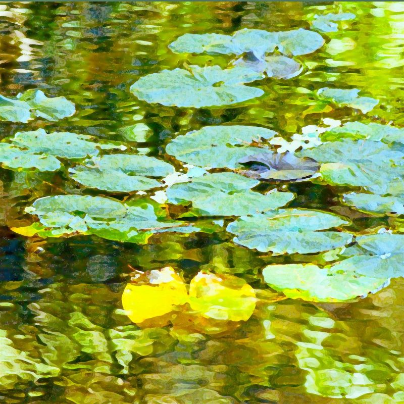 McGarrahDa_Green-Tranquility_Photo_12x12