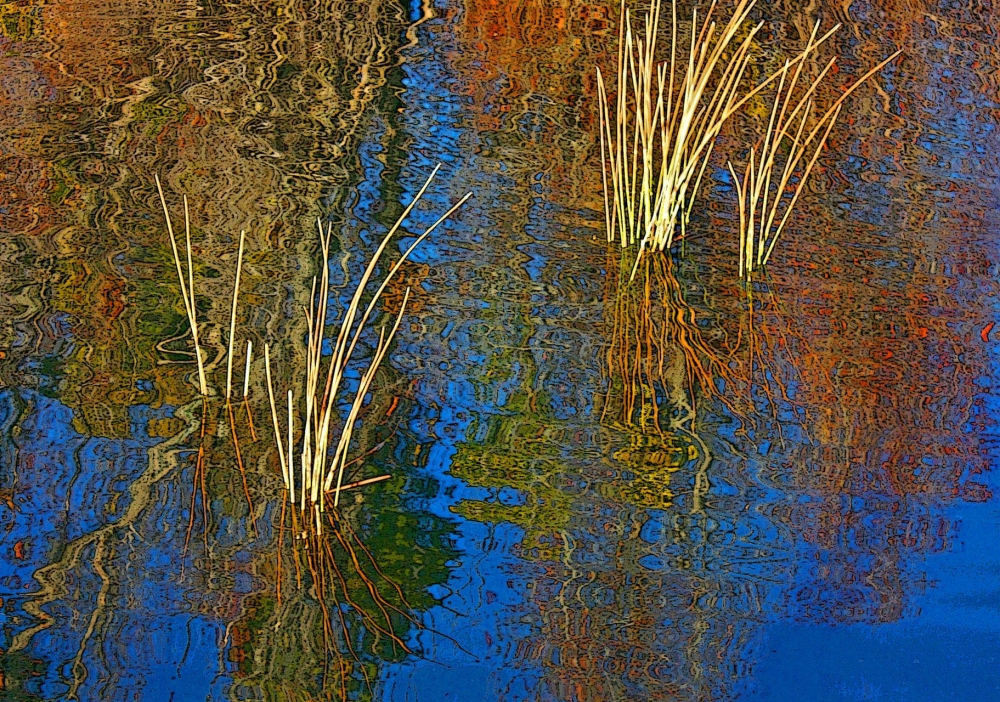 vanzandtvi_reedsandreflections_photo_21x27