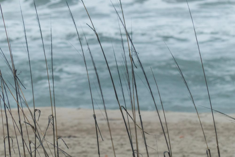 AllenLenell_Outer-Banks-Seashore-087_Photo_20x30