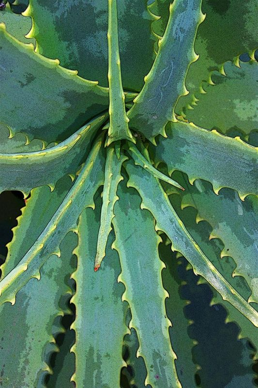 VanZandtVirginia_Cactus-Heart_Photo_27x21