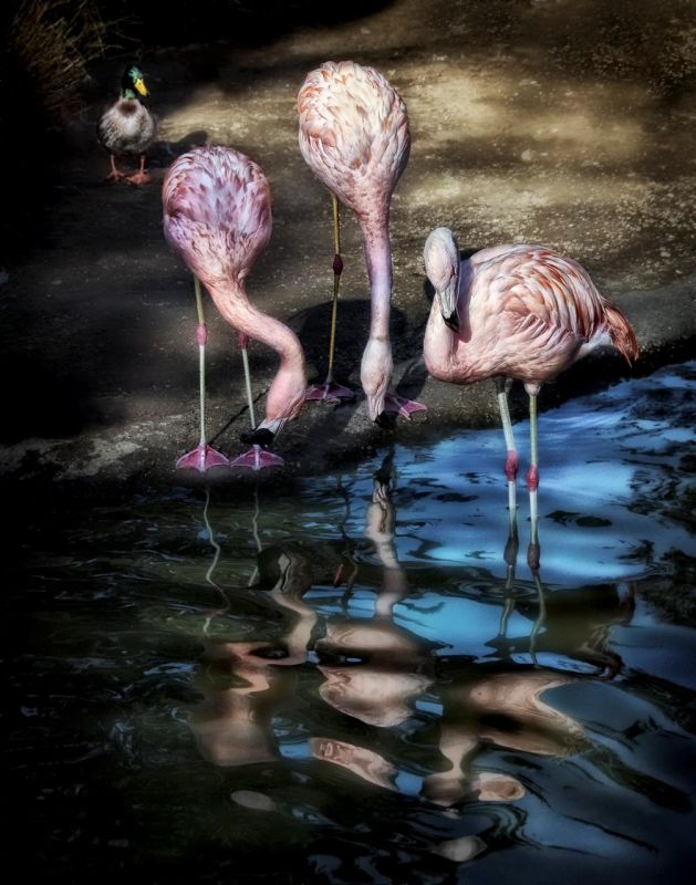 BorrelliPa-Tres-Flamingos_Photo_14x11