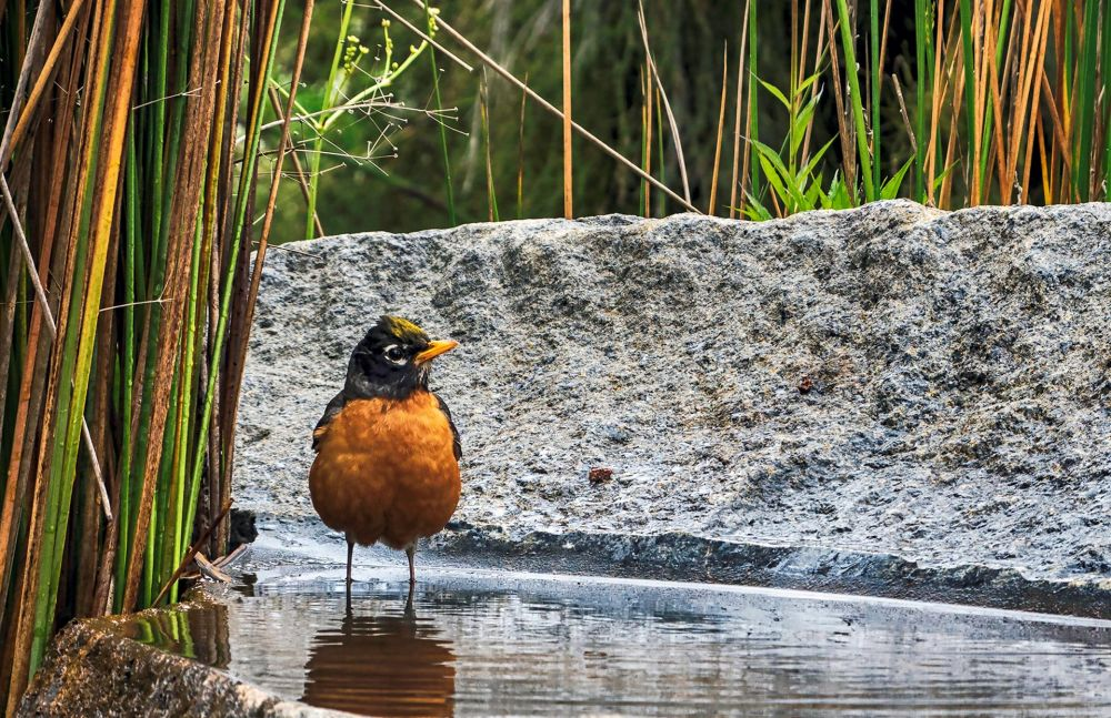 CataldoBe-Robin-Pool_Photo_15.5x21