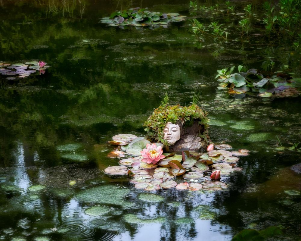 BorrelliPa_Buddha-Botanical-Pond_Photo_16x20