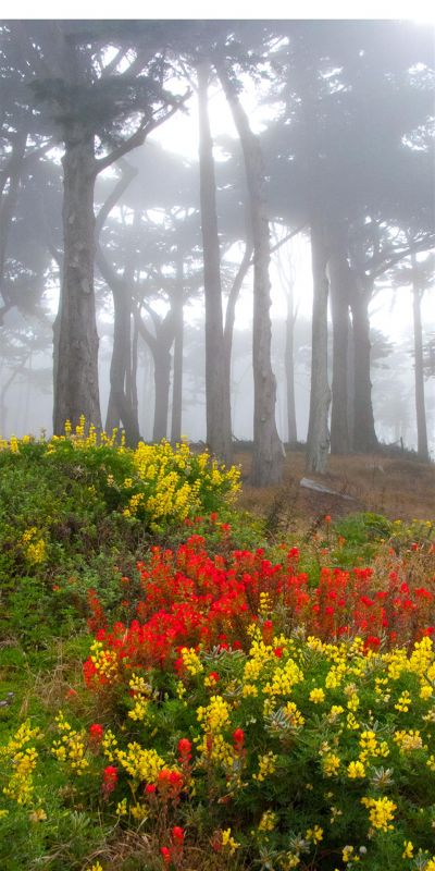 KayCh-Lands-End-Wildflowers-in-the-Fog_1