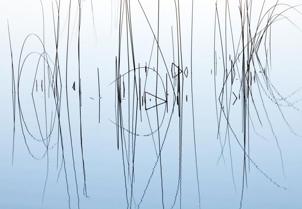 KibreCh-Reeds-Reflected_Photo_17x21