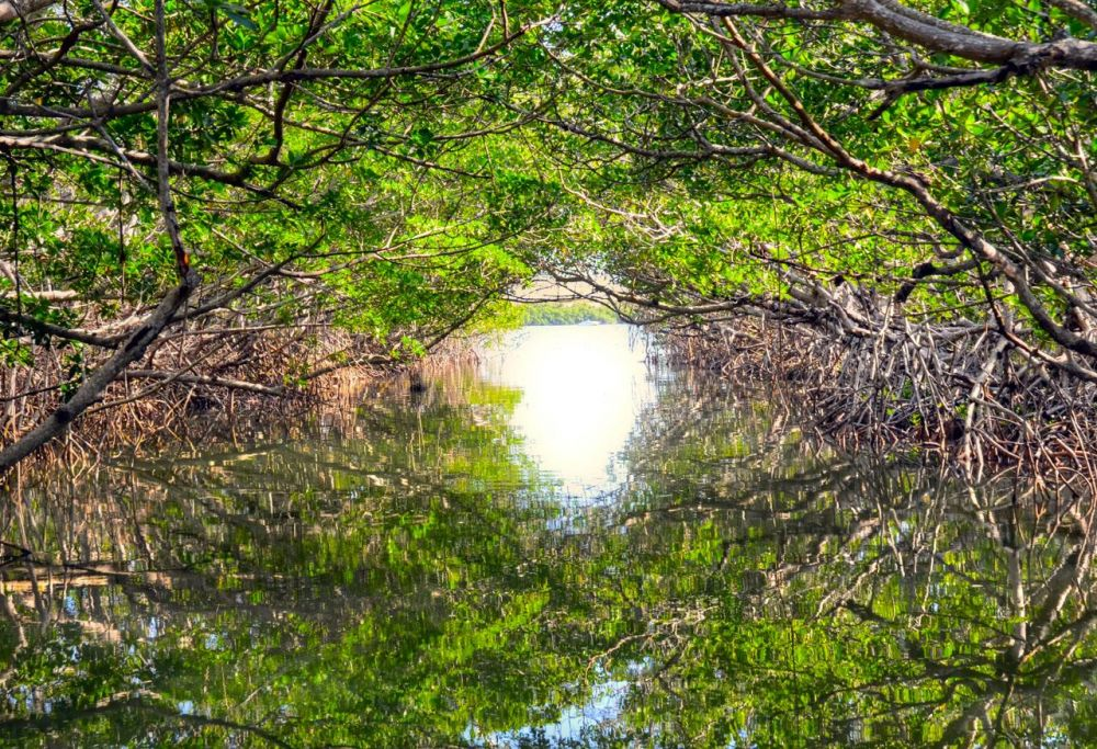CainDe-Everglades-National-Park_photo16x20