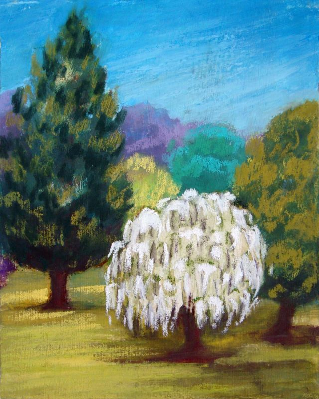 CoggeshallKa-a-White-Tree_Pastel_10x8