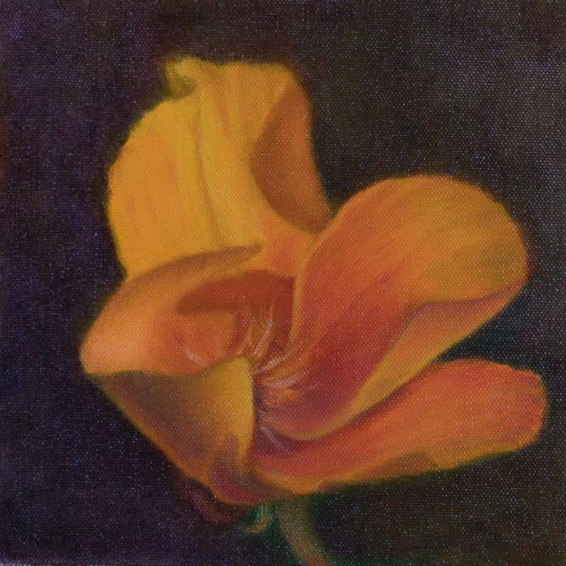 Paris-SeubertMi-Orange-Poppy_Oil_9.25x9.25