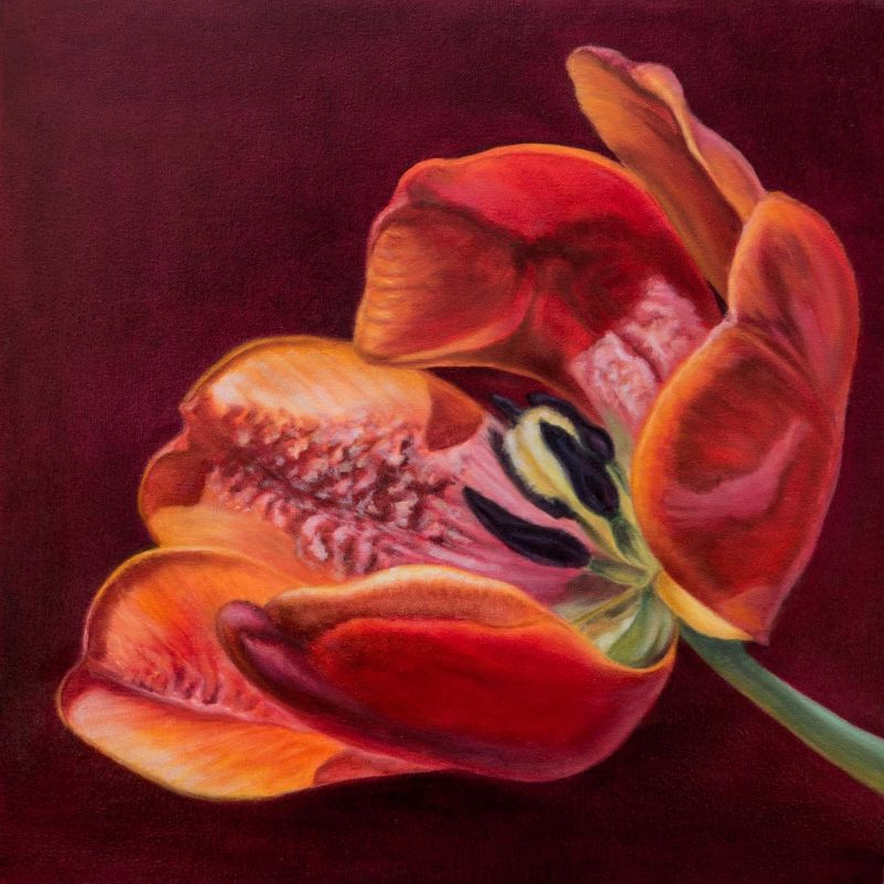 Paris-SeubertMi_Red-Tulip_Oil_21.75x21.75