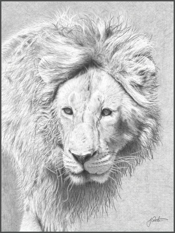 ArthurJen-Lion-on-the-Prowl_Pencil-21x21