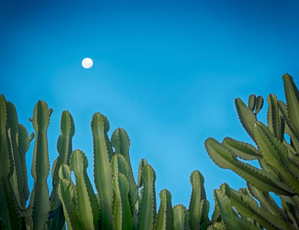 LevantJe-Peruvian-Moon_Photo_21x17