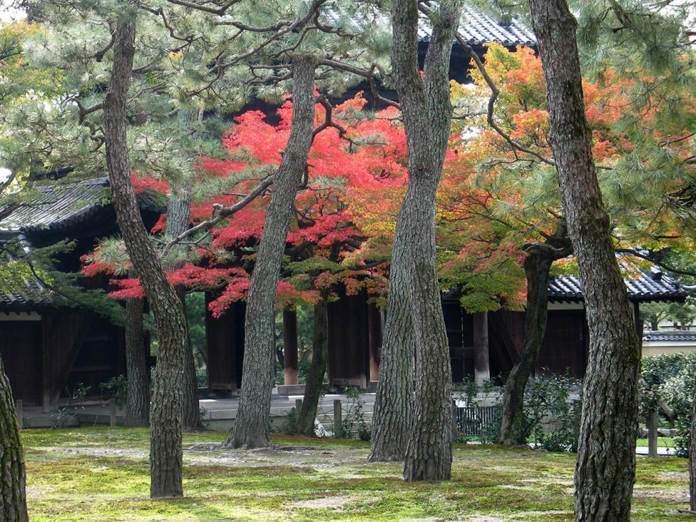 1_Lubanski-WengerBa-Temple-Trees-in-Autumn_1