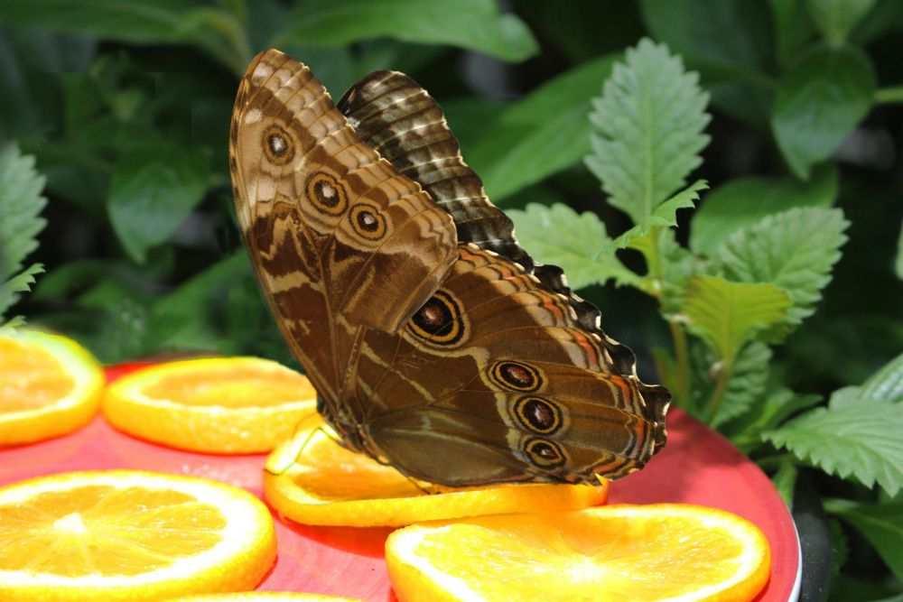 VanZandtVi-Butterfly-Lunch_Photo_19x23