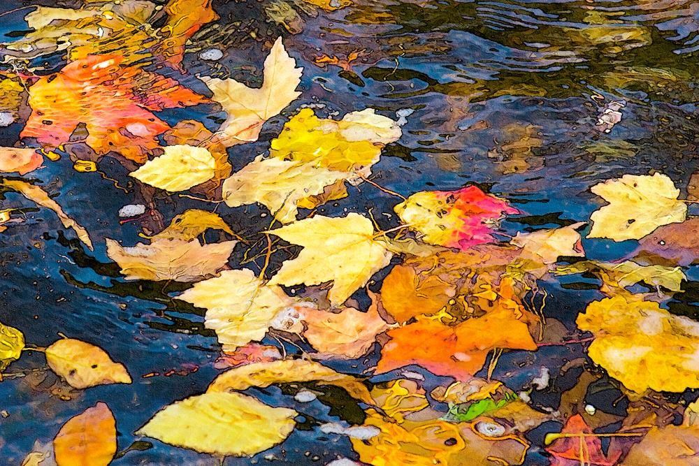 KayCh-Leaves-in-the-Stream_1