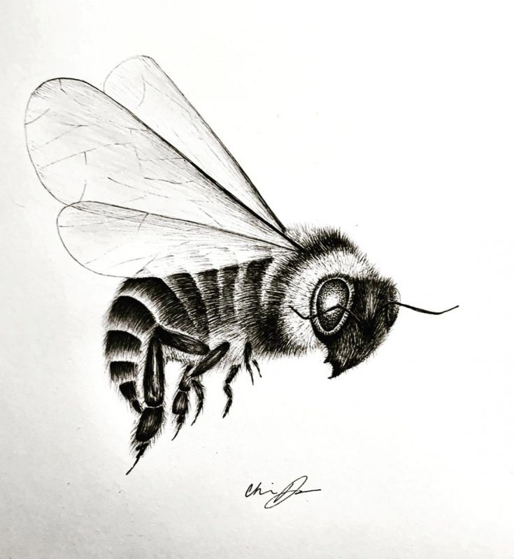 ReynaCh-Worker-Bee_PenInk_18x14