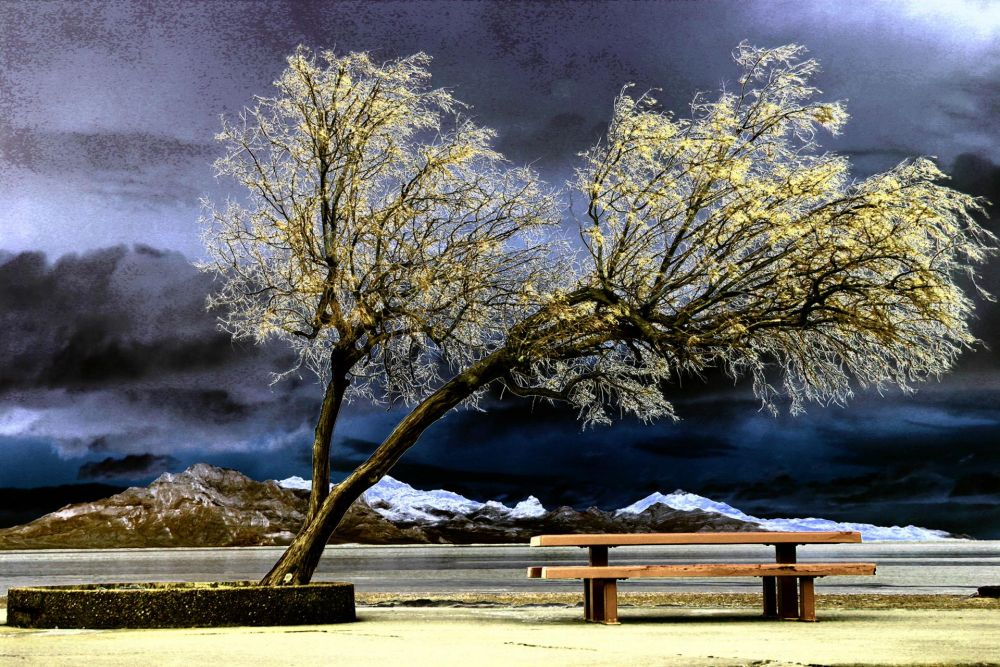VanZandtVi-Tree-and-Bench-Winter_1