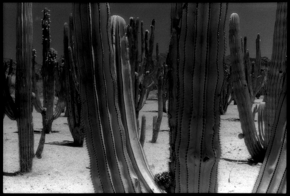 CainDe-Mexican-Cacti_Photo_18x22