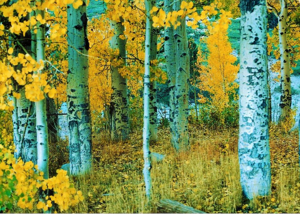 McguirePa-MT-ROSE-ASPENS-EASTERN-SIERRAS_Photo_16x20