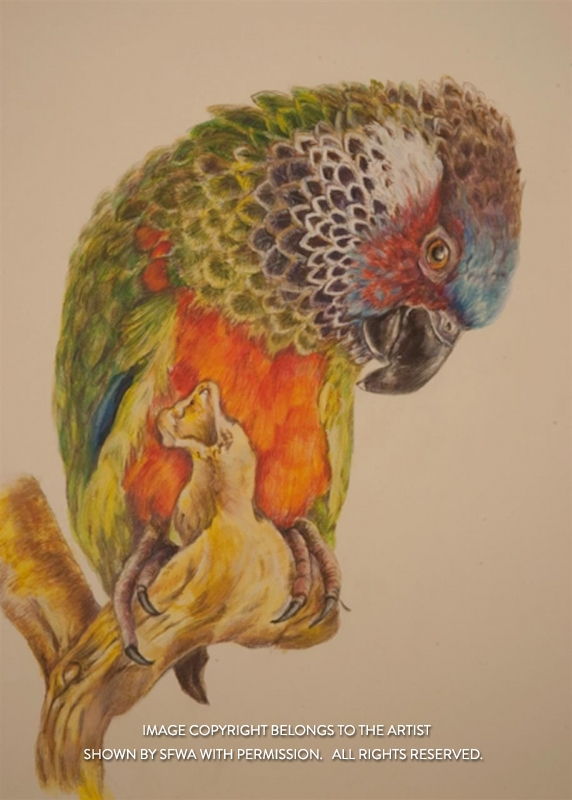 LiebeltLi_Painted-Conure_MM_16x20