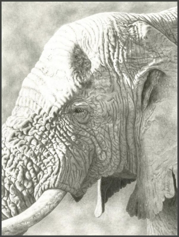 ArthurJennifer-60YearOld-Bull-Elephant_pencil21x17