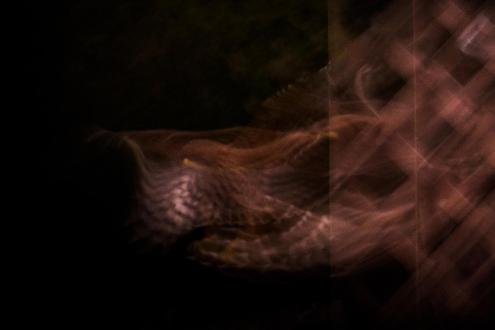 ShinnWe_The-Rapter-After_PhotoArt_15x10