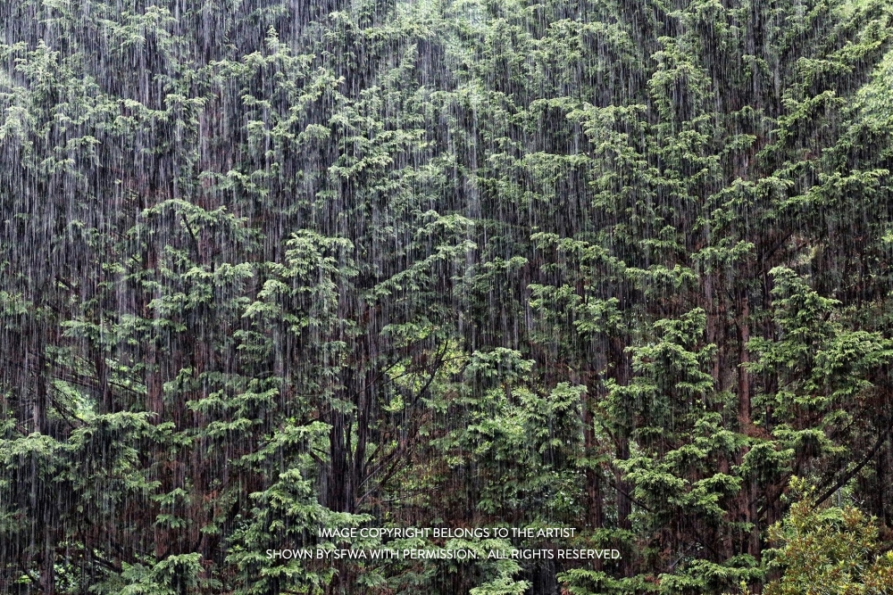Whittall_Rain_photo-art_25x19