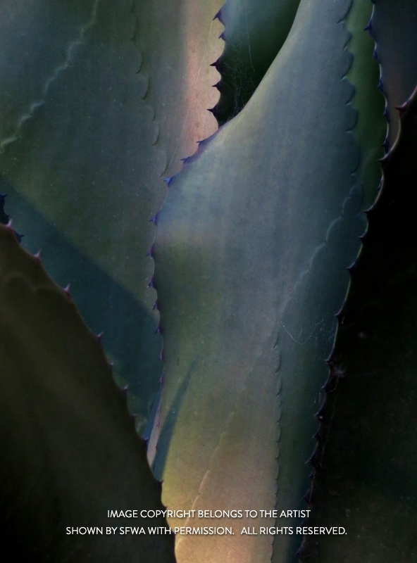 EverittAn_Succulent_Photo_21x27